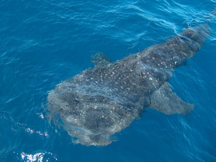 Ocean Adventures in Mozambique